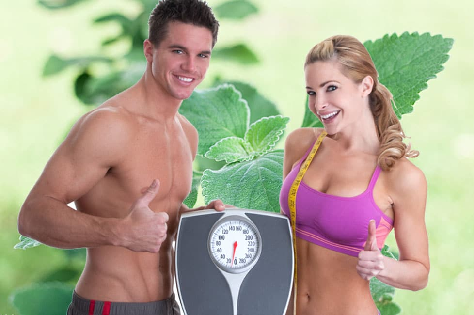 What Is The Best Forskolin Supplement?