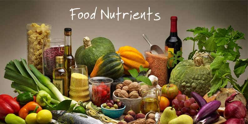 food-nutrients