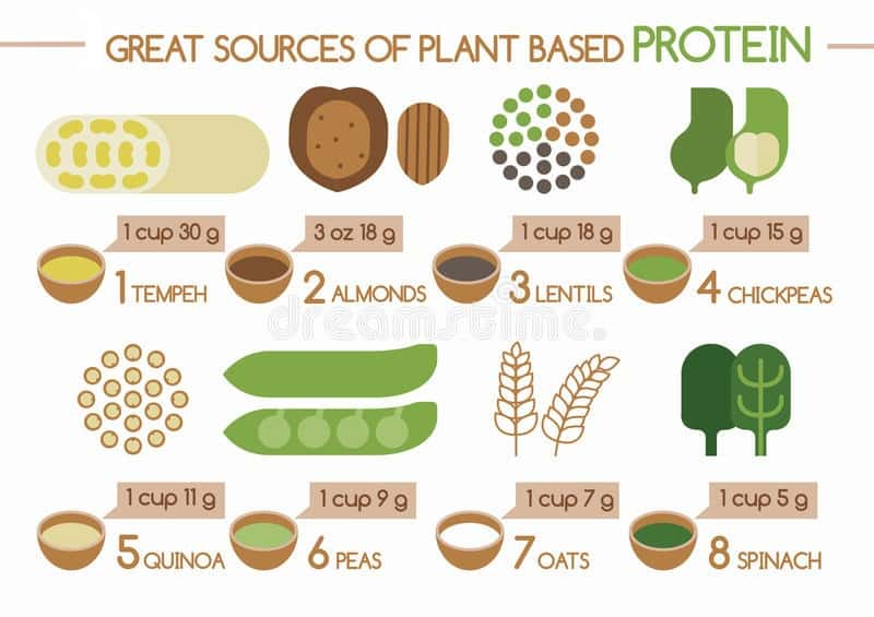 sources-plant-based-protein
